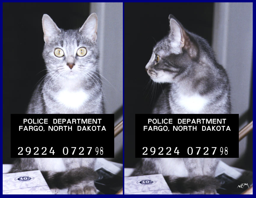 badcat.jpg